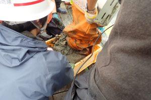 第21回 JAMBIO沿岸生物合同調査 4