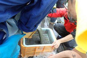 第21回 JAMBIO沿岸生物合同調査 6