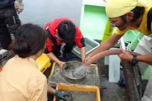 第21回 JAMBIO沿岸生物合同調査 7