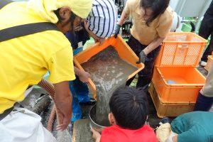第21回 JAMBIO沿岸生物合同調査 8