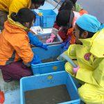 第22JAMBIO沿岸生物合同調査画像